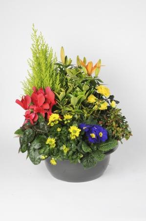 Assemblage 7 Plantes 55cm x D36