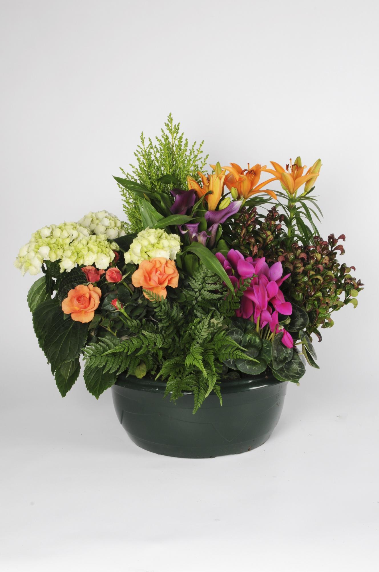 Assemblage 8 Plantes 70cm x D41