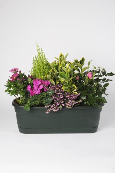 Jardinière 6 Plantes 50cm x D50